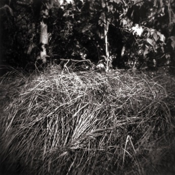 "Grasslands, 20099.5"" x 9.5"" toned gelatin silver print"