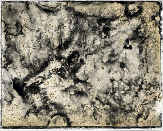 Caleb Charland, A Picture of Grey Eaten by Bacteria, 2009