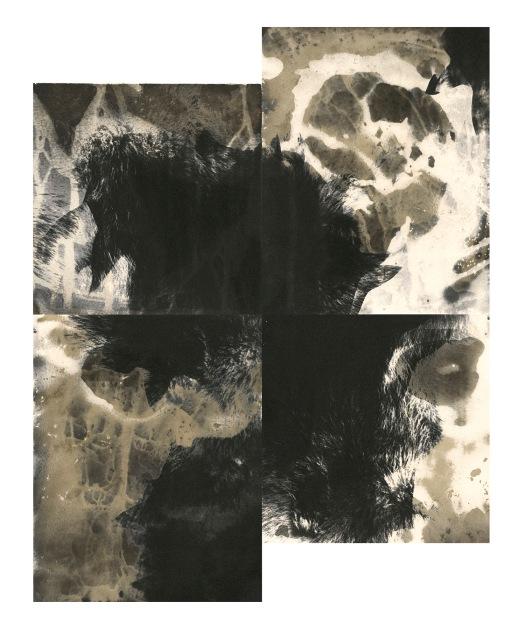"Coyotes, unique gelatin silver prints, 18"" x 16"", 2020"